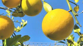 レモンで疲れを癒す
