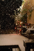 Snow Day-12.jpg