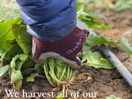 Hand Harvested
