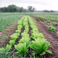 farm387.jpg