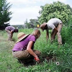 farm367.jpg