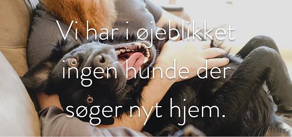 Ingen hunde.png