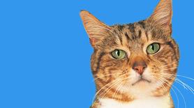 Novembro azul: câncer de próstata é de difícil identificação em cães e gatos