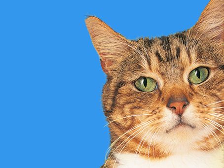 猫ちゃんの頻尿?