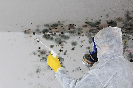 A Man removing Mold fungus with respirat