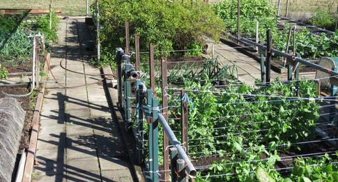 The vegetable garden at Bilyana Cottages