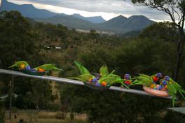 Rainbow Lorikeets at Bilyana Cottages