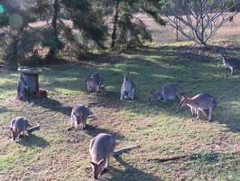 Enjoy the wildlife at Bilyana Cottages