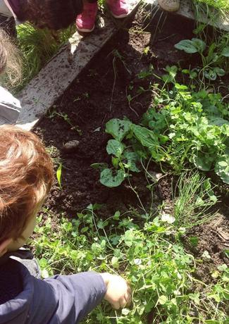Jardin potager avec notre partenaire La Commune