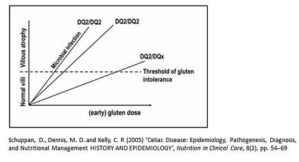 HLA gene variant is a major risk factor for gluten sensitivity and Celiac (Coeliac)