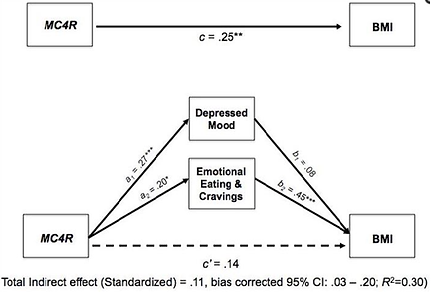 MC4R gene variants effect on stress and weight gain, obesity. Emotional eating DNA diet