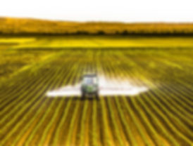 Tractor spraying a field of corn.jpg