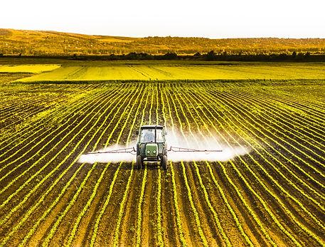 Tractor spraying a field of corn.jpg