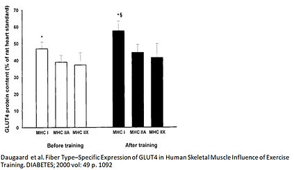 Glucose transporter SLC4A2/GLUT4 genetic variants (polymorphism, SNP)affect MHC I muscle fibers, a muscle type associated with endurance training.