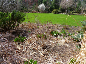 Spring Landscaping Ideas (for those who hate yard work)