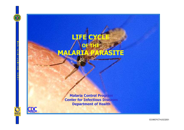 lifecycle_of_malaria_2006_compatibility_mode_1