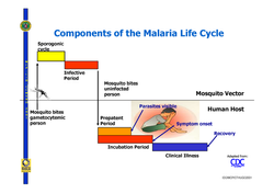 lifecycle_of_malaria_2006_compatibility_mode_4
