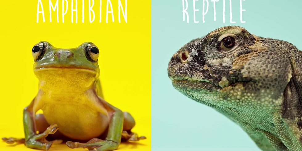 Reptiles and Amphibians Discovery