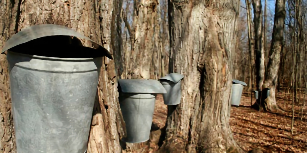CANCELLED Maple Sugaring Demo (Friday)