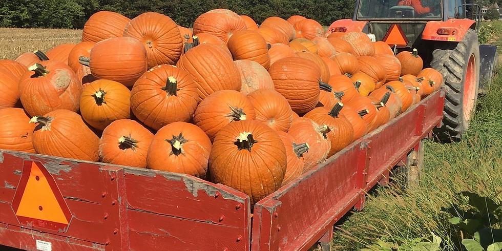 Pumpkin Farm Tour
