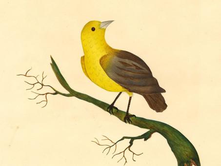 Giacomo Leopardi: Panegyric of Birds
