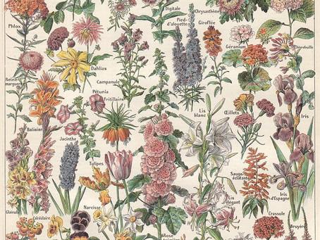"""""""Ce que disent les fleurs"""", par George Sand"""