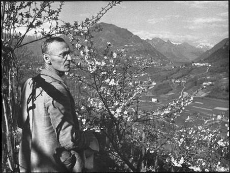 Hermann Hesse : The Wisdom of Trees