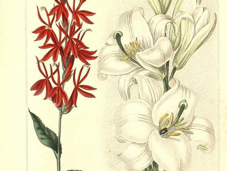 """Consider the Lilies"", by Søren Kierkegaard"