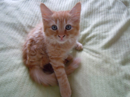 (Cat's Corner) Pictures of Nugget when he was but a babe. (WARNING: EXTREME CUTENESS CONTENT).