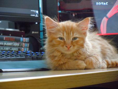 Nugget the Catsquatch
