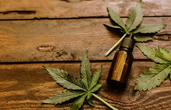 green-leaves-of-medicinal-cannabis-with-