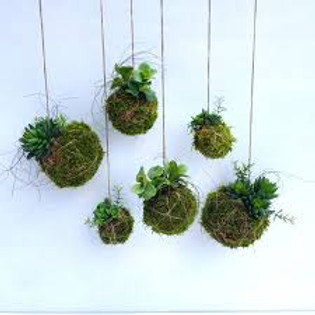 Kokedama Workshop make your own 'Japanese hanging garden' $65pp (1)