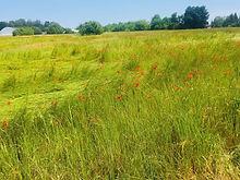 champs-de-fleur-auvers.jpg
