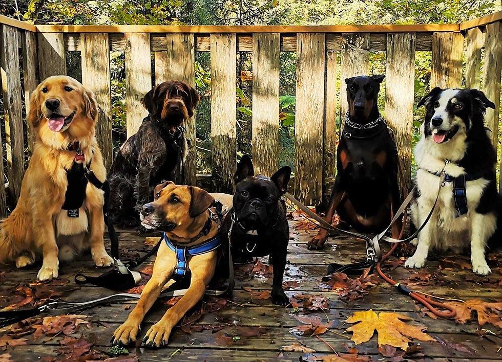 Dog Crew.JPG