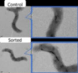 Picture1_Comparison of nubmer of magneto