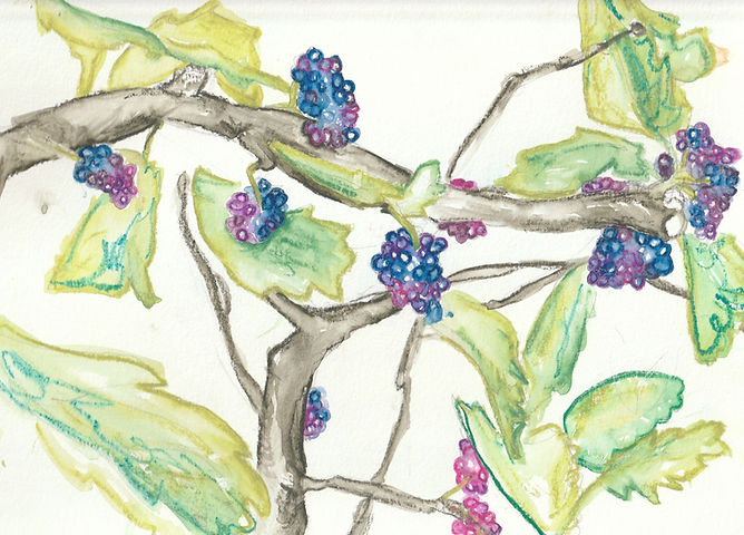 Mulberry Tree.jpg
