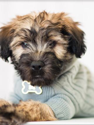 PARLR Boston Metrowest Pet Portrait Phot
