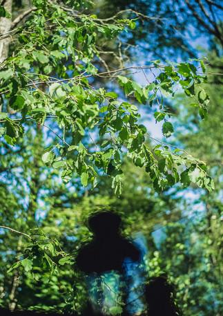 Вид на лес из панорамных окон гриль-домика
