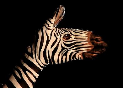 Zebra_Détouré.png