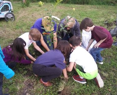 Tree planting5