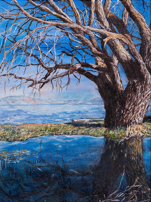 Julianna festmény - Öreg fa a vízparton