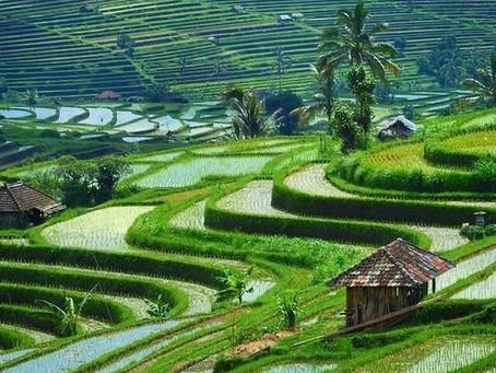 Bali, az istenek szigete