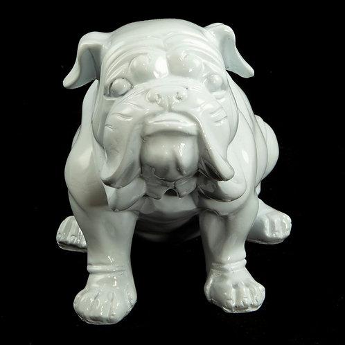 Springfield angol bulldog
