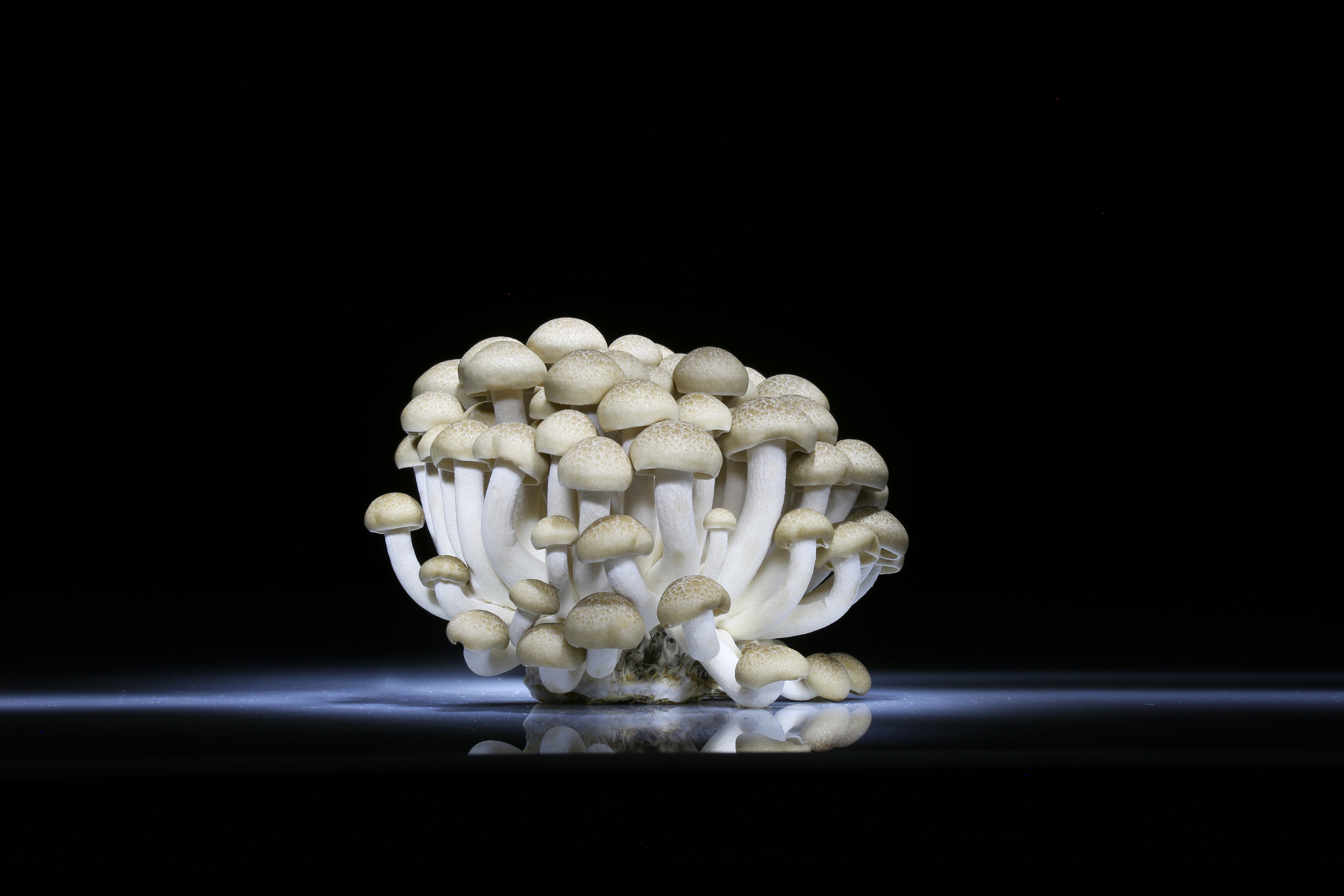mushrooms, photo, amazing
