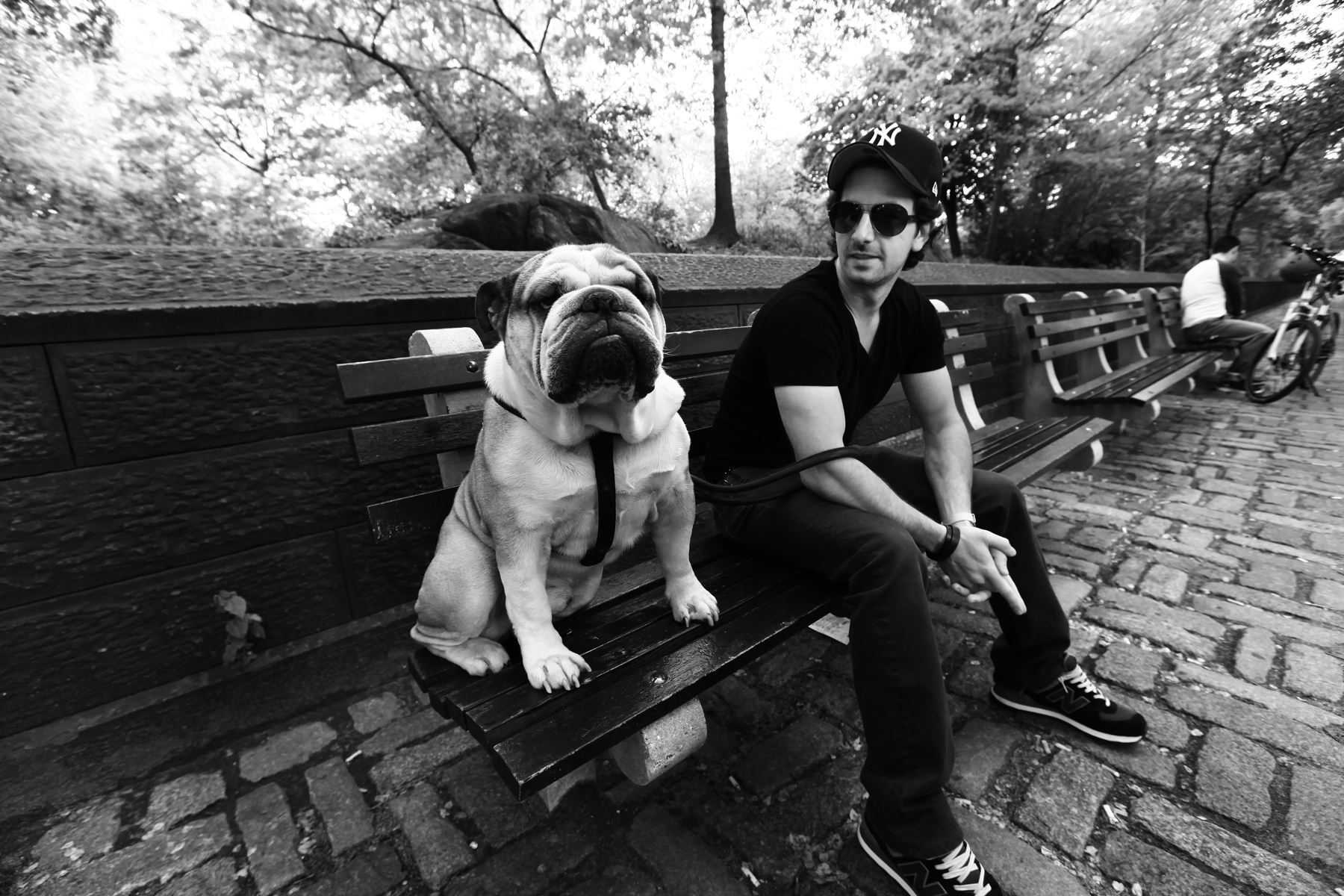 new York , bulldog, central park
