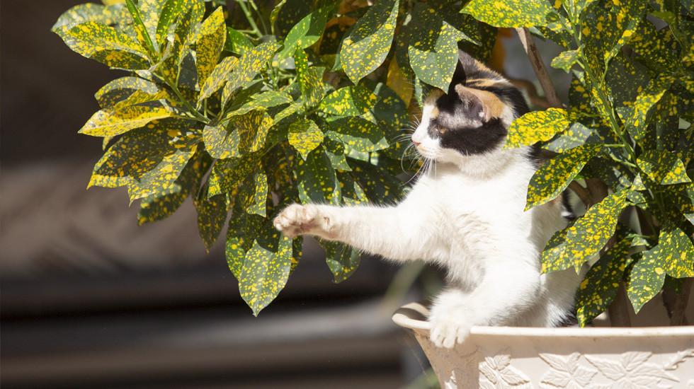Cat1-980x550.jpg