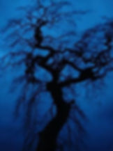 black bare leaved tree on blue background.