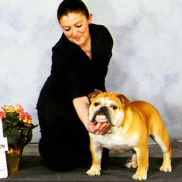 Pelee Bulldogs | Breed Conformation | Arrow