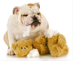 Marshall & teddy