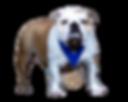 Pelee Bulldogs. Champion Bulldog Breeder Ontario Canada